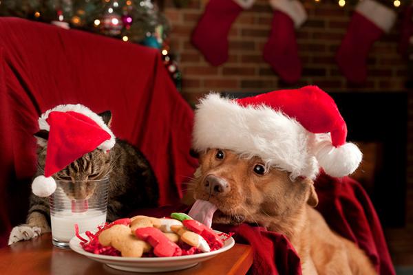 Consejos para evitar abusar del alcohol estas Navidades